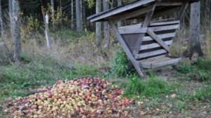 Omenoita tarjolla
